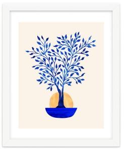 Blue-Ficus-Sunrise